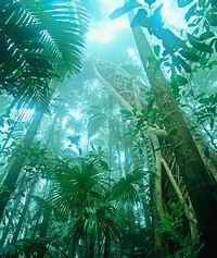Fraser-rainforest