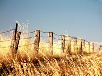 Outback_fence
