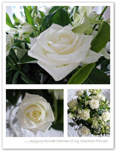 Valentine's roses c