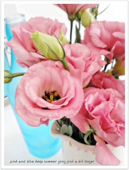 Flowers 077abc