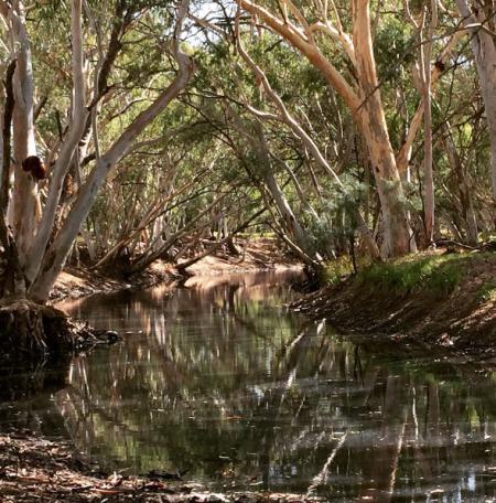 Alice River