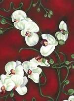 Royalorchids310111_2